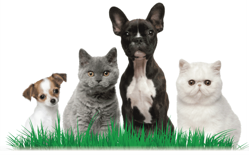 Dogs and Cats in Grass