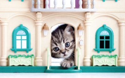 Cat in Toy Castle