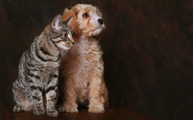 Cat and Dog Portrait