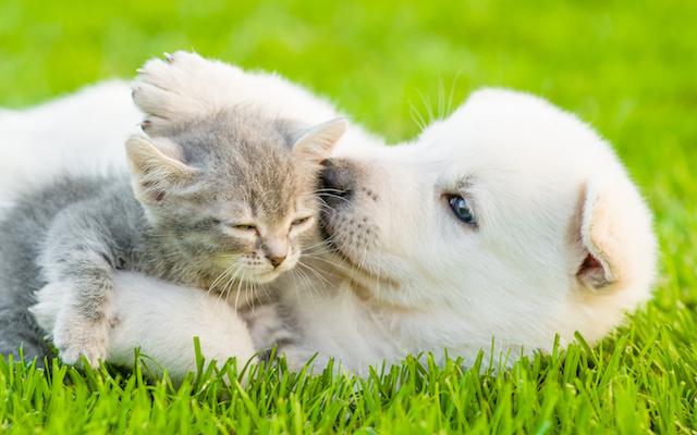 Puppy and Kitten in Grass