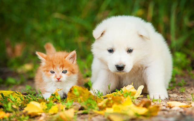 Kitten and Puppy in grass
