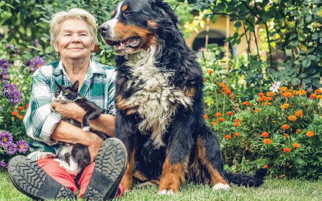 Older dog and cat with Owner